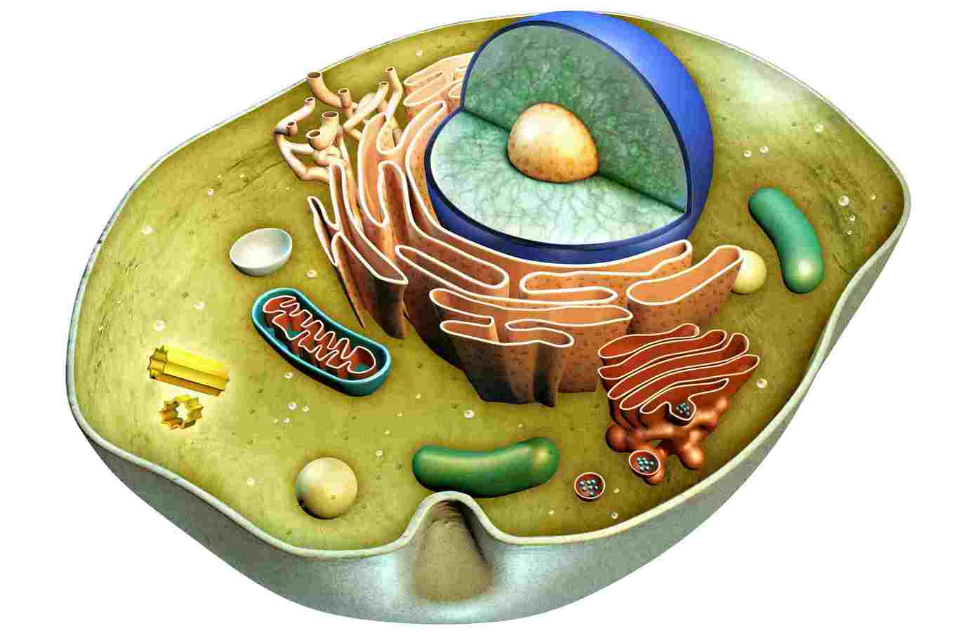 What can i do a research project on cellular biology ideas
